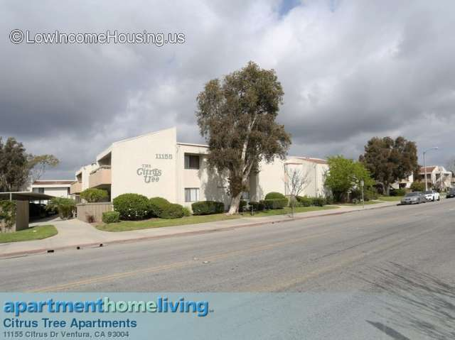 Citrus Tree Apartments Ventura